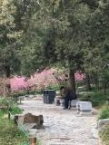 Pekin jardin de la cité interdite