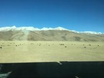 plateau tibétain (2)